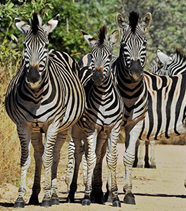 The magnificent Kruger Park